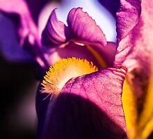 Violet flower closeup by 60nine