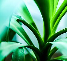 Green plant by 60nine