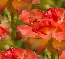 Roses Galore Sticker