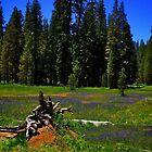 Summit Meadow at Yosemite by Nancy Richard