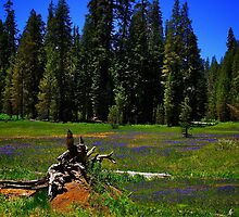 Summit Meadow at Yosemite by Nancy Richard