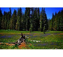 Summit Meadow at Yosemite Photographic Print