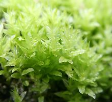 Bright green moss - 2011 by Gwenn Seemel