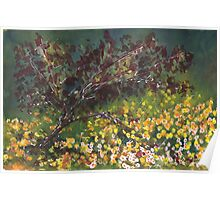 Spring Red Maple Poster