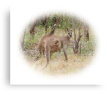 Kangaroos in the Park Canvas Print