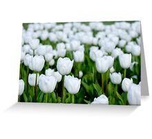 White tulips in a field Greeting Card
