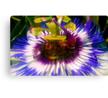 Passion Flower with bees Canvas Print