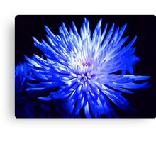 Feeling blue... Canvas Print