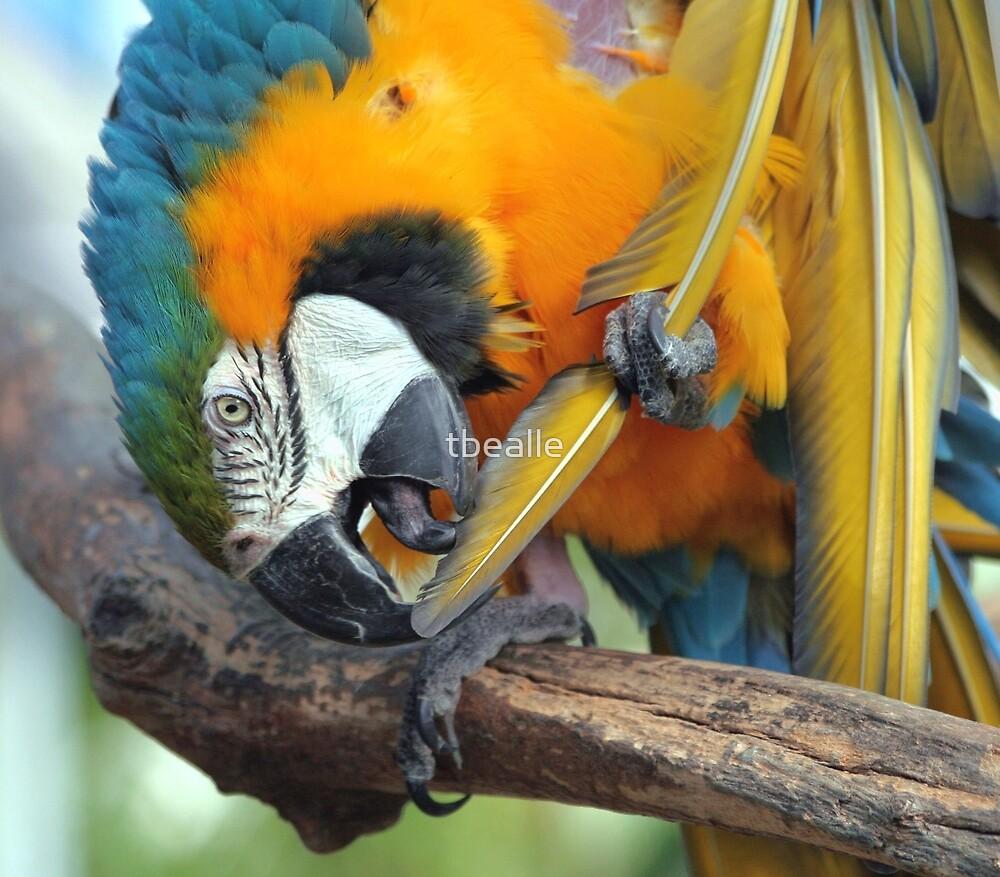 Feather Lickin' Good by Terri~Lynn Bealle