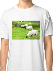 View of English grazing sheep in countryside Classic T-Shirt