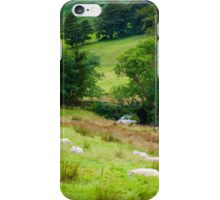 View of English sheep in countryside, UK iPhone Case/Skin