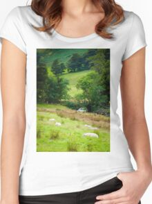 View of English sheep in countryside, UK Women's Fitted Scoop T-Shirt