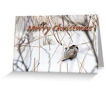 Christmas Chickadee 1 Greeting Card
