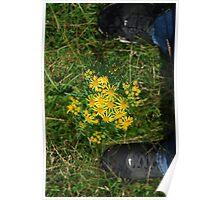 flower between nike Poster