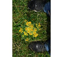 flower between nike Photographic Print