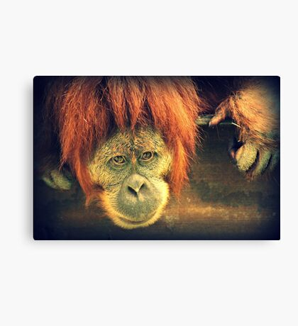 What are you looking at? Canvas Print