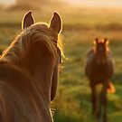 Living with Horses by Petri Volanen