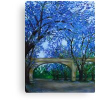 Jacaranda Trees Canvas Print