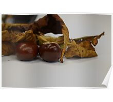 Horse Chestnuts Poster