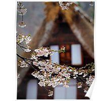 Cherry Blossom Season in Japan Poster