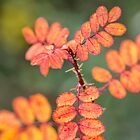 Bilberry Autumn Leaves by M.S. Photography & Art