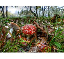 Fly Agaric or Fly Amanita Photographic Print