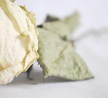 Soft Detail by Sarah Cowan