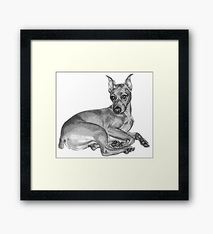 Zen Mini Pinscher ~ Black and white Framed Print