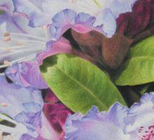 'Rhododendron' Sticker