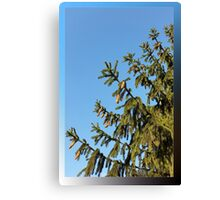 Tree for Christmas Canvas Print