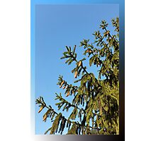 Tree for Christmas Photographic Print