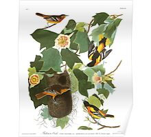 Baltimore Oriole - John James Audubon Poster