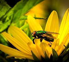 A Bugs Life by StephenRphoto