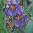 Iris for the Autumn by Lori Elaine Campbell