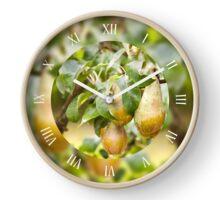 Pear tree fruits grow on twig Clock