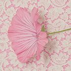 Pink Lavatera Blossom On Vintage Lace - Macro by Sandra Foster