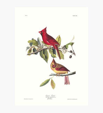 Northern Cardinal - John James Audubon  Art Print