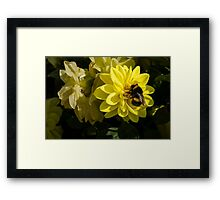 The Busy Bumble Framed Print