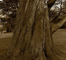 The Old Oak Tree by MarcoBell