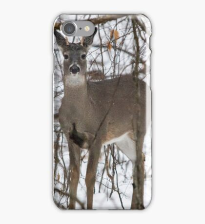 Curious Spike Buck iPhone Case/Skin
