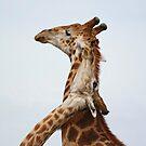 Southern Giraffe (Giraffa giraffa) by Ludwig Wagner