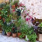 The Corner Plants.....................................Majorca by Fara