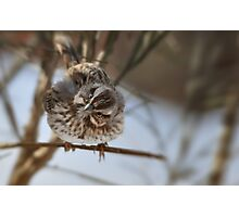 """Say What"" Song Sparrow Photographic Print"