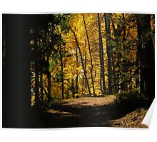 Path thru the woods...near Cripple Creek, Colorado Poster