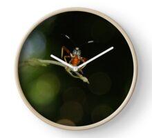 No soy una Cucaracha  Clock