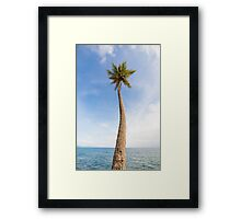 Tall palm tree against sky Framed Print