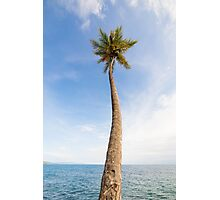 Tall palm tree against sky Photographic Print