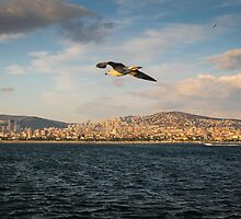 Flight over Istanbul by SuzannemorriS