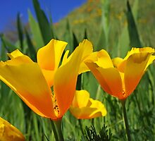 Bright Summer ORANGE Poppy Flowers Poppies Art by BasleeArtPrints