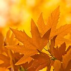 Autumn Leaves by Ann Warrenton